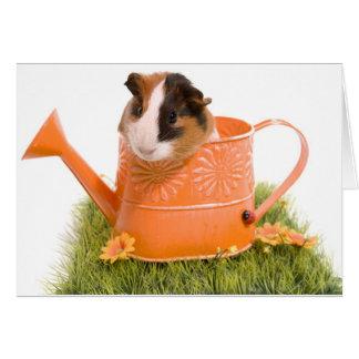 Tarjeta Guinea pigs se tiene lawn