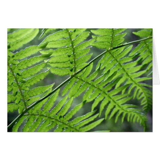 Tarjeta Helecho verde
