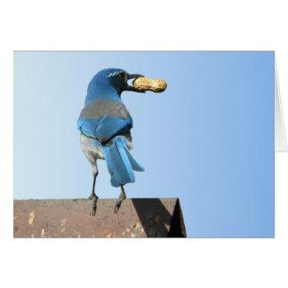 Tarjeta Hermoso friegue el pájaro de Jay
