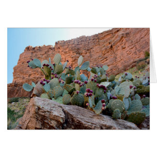 Tarjeta Higo chumbo en Gran Cañón