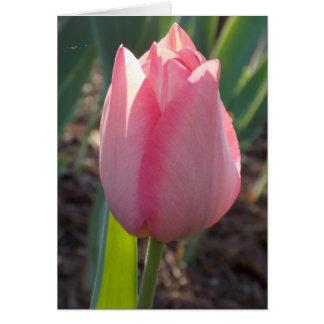 Tarjeta Holandés rosado