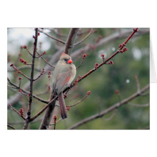 Tarjeta horizontal del cardenal 4539