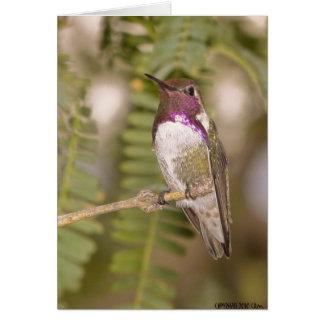 Tarjeta Hummingbirds068
