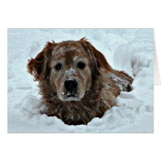 Tarjeta Humor del cumpleaños de enero con el perro lindo