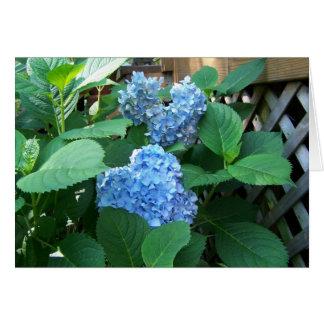 Tarjeta Hydrangea azul