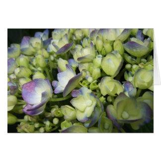 Tarjeta Hydrangea poner crema y púrpura