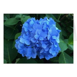 Tarjeta HYDRANGEA tan azul y verde -