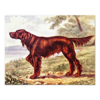 Tarjeta Ilustracion 1900 de Irish Setter del perro que se