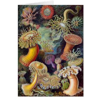 Tarjeta Ilustracion científico de las anémonas de mar del