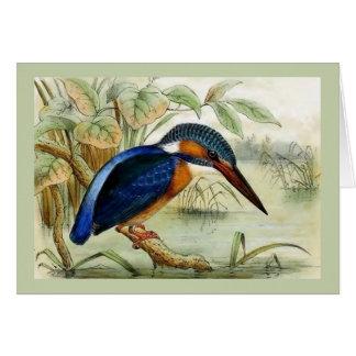 Tarjeta Ilustracion del pájaro del vintage del martín