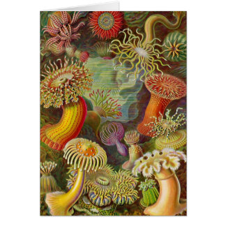 Tarjeta Ilustracion del vintage de las anémonas de mar