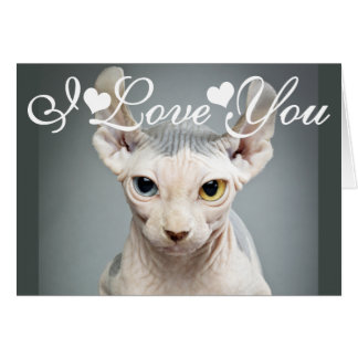 Tarjeta Imagen de la foto del gato de la esfinge del