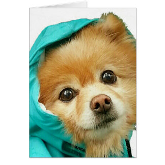 Tarjeta Impermeable de Pomeranian #