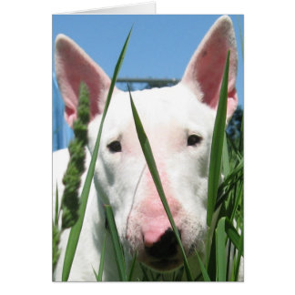 Tarjeta Inglés lindo bull terrier