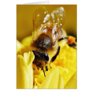 Tarjeta Insectos de la macro de las alas de los insectos