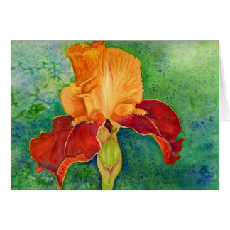 Tarjeta Iris barbudo