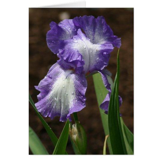 Tarjeta Iris premiado