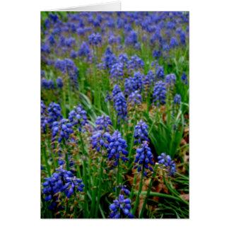 Tarjeta Jacinto armenio azul Notecard