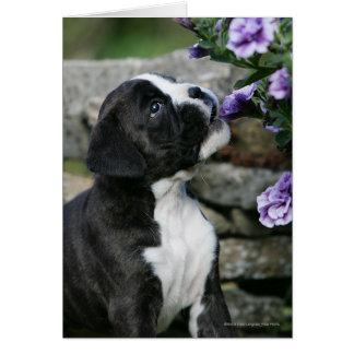 Tarjeta Jadeo del perro del boxeador
