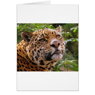 Tarjeta Jaguar inquisitivo