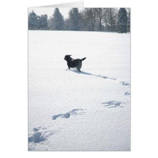 Tarjeta Juegos negros de Labrador en la nieve