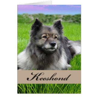Tarjeta Keeshond, perro en la hierba, interior en blanco