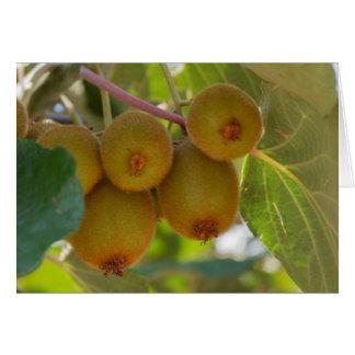 Tarjeta kiwi en árbol