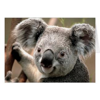Tarjeta Koala