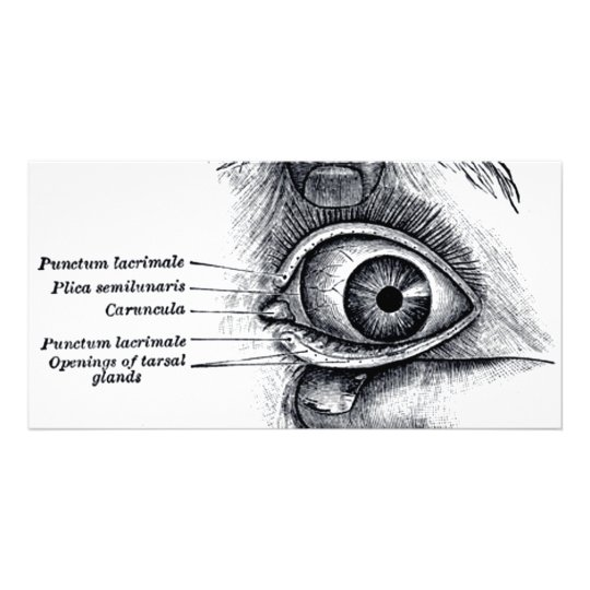 Tarjeta La anatomía del gris - globo del ojo
