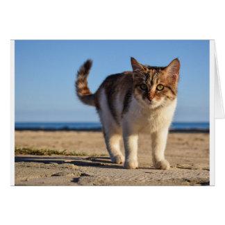 Tarjeta La cara joven linda animal perdida del gato