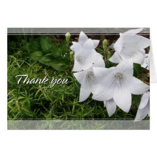 Tarjeta La flor de globo (Bellflower chino) le agradece