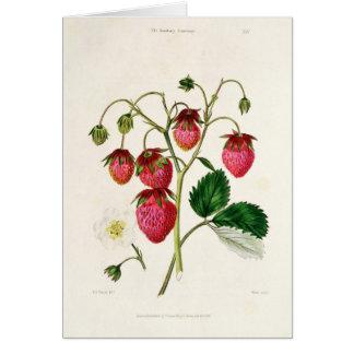 Tarjeta La fresa de Roseberry, grabada por Watte