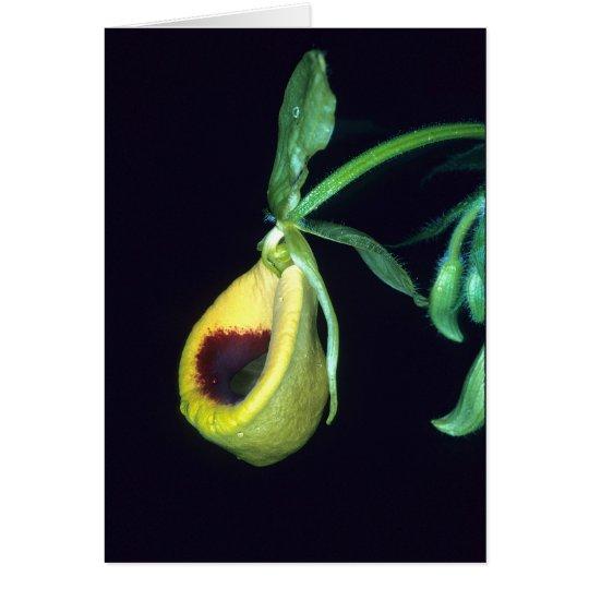 Tarjeta LA GUAYANA FRANCESA: Palmifolium del Selenipedium