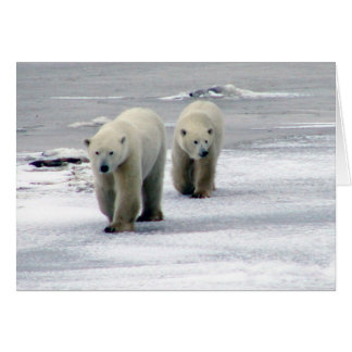 Tarjeta La mamá y Cub del oso polar cardan