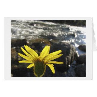 Tarjeta La opinión de una flor de la cala de maderas