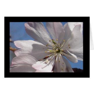 Tarjeta La primavera florece II