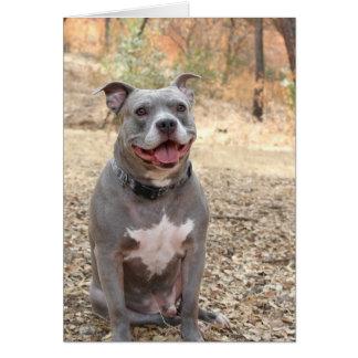 Tarjeta La sonrisa del Oído-a-Oído de Pitbull le agradece