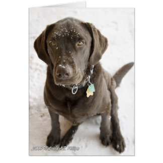 Tarjeta Laboratorio asperjado nieve del chocolate