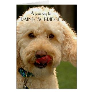 Tarjeta Labradoodle, condolencia del perro - puente del