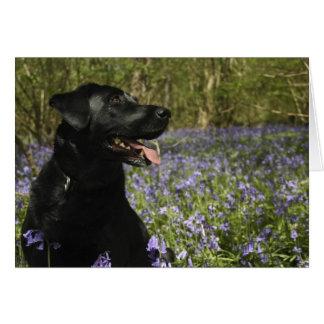 Tarjeta Labrador negro