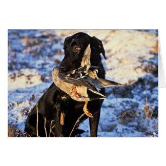 Tarjeta Labrador retriever con el pato silvestre de Drake