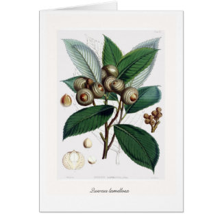 Tarjeta Lamellosa del Tarjeta-Quercus