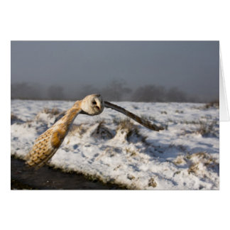 Tarjeta Lechuza común en nieve