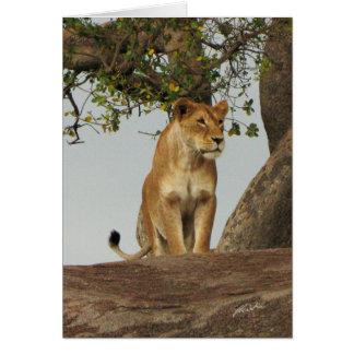Tarjeta (Leona de los clubs de leones) en Kopje