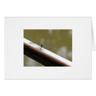 Tarjeta libélula en el pantano