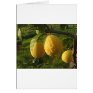 Tarjeta Limones amarillos que crecen en el árbol en la