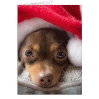 Tarjeta linda de Feliz Navidad de la chihuahua de