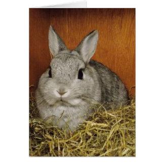 Tarjeta linda del conejo
