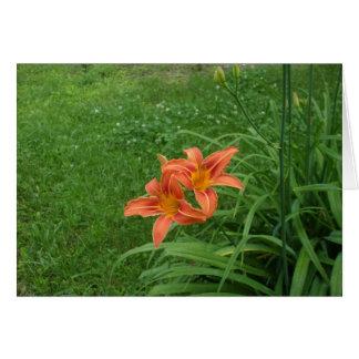 Tarjeta Lirio-En blanco del tigre anaranjado