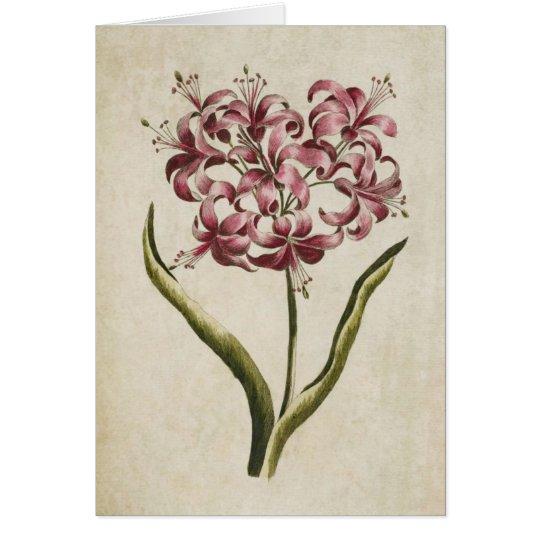 Tarjeta Lirio floral botánico de Guernesey del vintage
